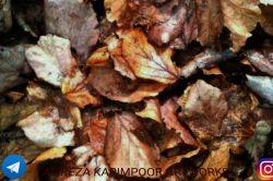عکسی در استان فارس شهرستان استهبان   پیج انستاگرامم:alireza__karimpoor