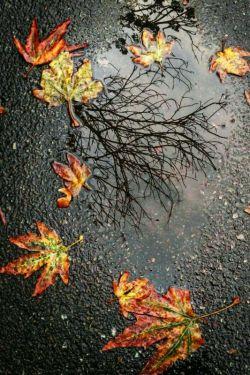 زندگی را نفسی ارزش غم خوردن نیست و دلم بس تنگ است.باز هم میخندم آنقدر میخندم که غم از روی رود...
