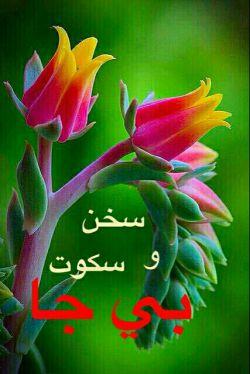 ️حضرت علی _علیه السلام_ میفرمایند:  ...در آنجا که باید سخن گفت؛ خاموشی سودی ندارد، و در آنجا که باید سکوت کرد، هیچ خیری در کلام نخواهد بود!  (حكمت- ٤٧١)