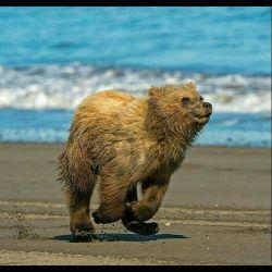 #bear  #خرس #حیوانات