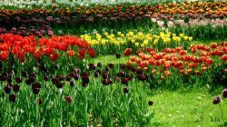 عکس از خودم...جای دوستان خالی...جشنواره گلهای لاله..عکس با سه پایه..با تایمربرای تکان نخوردن..سرعت شاتر پایین
