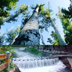 دریاچه پارک جنگلی وکیل آباد