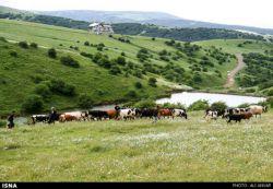 طبیعت بهاری #اردبیل