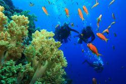 غواصی با تجهیزات (Scuba Dive) اگر برای بازدید از لاشههای کشتی از بندر بازدید کردید، پیشنهاد میکنیم حتما غواصی با تجهیزات را در این ناحیه امتحان کنید. میتوانید تا عمق ۱۴ متری آب را جستجو کنید و کشتیهای باستانی یونانی را در کف آب تماشا کنید.