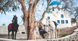 اسب سواری یکی از محبوبترین تفریحاتی است که میتوانید در سراسر سانتورینی پیدا کنید. چه با خانواده باشید یا دوستان، چه سفر ماه عسلی باشد یا نه، در هر صورت لذت زیادی از انجام این ورزش جذاب خواهید برد. میتوانید سوار بر اسب در اطراف تپههای جزیره یا در طول ساحل به گشت و گذار بپردازید.