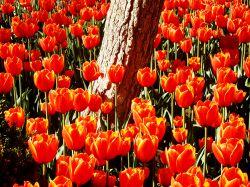 عکس از خودم...یک درخت استوار با پوست ضمخت در میان گلهای زیبا با عمر کوتاه...عکاسی که میکنی وقتی عکسهاتو میبینی همون حسهایی که داری برات زنده میشن..