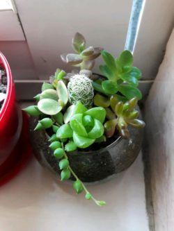 باغچه ی کوچک پشت پنجره