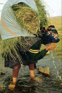 ای کسانی که ایمان آورده اید!   نماز بگذارید ٔبر آنکس که رود را زیارت میکند , آب را میبوسد , علف را میبوید و عشق را در بیکرانهء هستی می گسترانَد❤