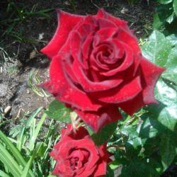 هدیه به تمام دوستان که منو دوست داشتن خیلی خیلی محبت دارین دوستون دارم خیلی زیاد