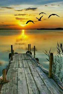 در صداقت عمقی ست که در دریا نیست  ؛؛؛؛  در سادگی بلندایی ست که در  کوه نیست  ؛؛؛؛  سادگی مقدمه صداقت ست؛؛؛ وفاصله سادگی تا صداقت دریا  ؛؛ دریا ؛؛ معرفت است  ؛؛؛