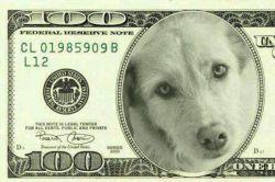 عکس واقعی دلار خخخخخخ