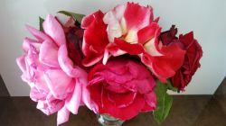 گل های رز من