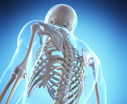 کلسیم یک ماده معدنی مهم برای حفظ ساختار و سلامت استخوان است و به عملکرد بسیاری از اعضای بدن مثل ماهیچه ها قلب و اعصاب کمک میکند. نیاز روزانه به کلسیم تنها با تغذیه تامین نمیشود و همین امر باعث میشود که افراد مستعد کمبود کلسیم باشند بخصوص زمانی که اتلاف آن افزوده میشود.بخاطر داشته باشید که وجود ویتامین D برای جذب کلسیم ضروری است.