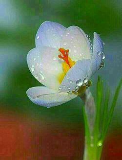پنج شنبه است وشب قدرشاخه گلی باذکرصلوات برای عزیزانی که بین مانیستن..روحشون شادویادشون.گرامی