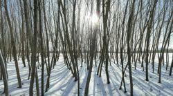 #hamrah1 _ روز برفی زمستان 95- شهرستان هرسین - لطفا اگر به نظرتون زیبااست لایک کنید ممنون.
