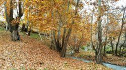 #hamrah1 _آرامش پاییزی- پاییز 95- باغات شهرستان هرسین .لطفا اگر به نظرتون زیبااست لایک کنید ممنون.