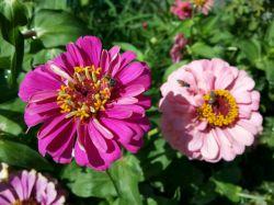 #hamrah1 _ تمایز بین دو گل در یک عکس