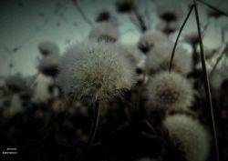 عکس از مجموعی از گلهای خاری