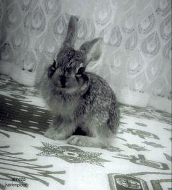عکسی از خرگوش خشکله خیلی دوسش دارم