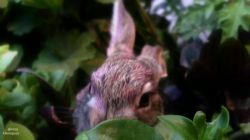 باز هکس دیگر از خرگوش خشکله  نمای زیباه