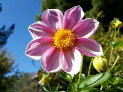 #hamrah1 _ یه گل زیبای دیگر توسط خودم