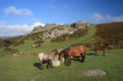 منطقهی «دارتمور»، یک پارک ملی است که در جنوب غربی انگلستان واقع شده است. منطقهای کوهستانی که جمعیت آن را اسبها، گوسفندان و گاوها تشکیل دادهاند و بهترین مکان برای غرق شدن در تاریخ و پیادهروی است. دریاچهها، مقبرههای ماقبل تاریخ و جنگلهای کاج آن منظرهای را تشکیل دادهاند که که مساحت آن کمتر از ۱۰۰۰ کیلومتر مربع است