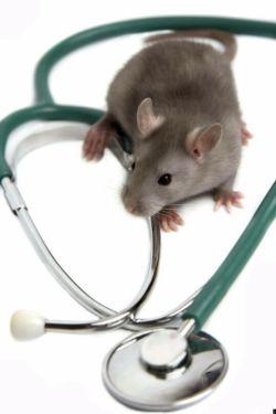 یی موش دوست داشتنی