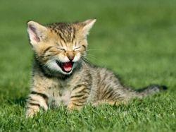 گربه در حال خندیدن