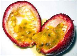 3.میوه ی هوس (Passion Fruit) : بومی آمریکای جنوبی ، در هند و نیوزیلند و برزیل و ... رشد می کند .