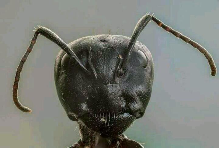 شکل مورچه از نزدیک ...سبحان الله الخالق العظیم ...