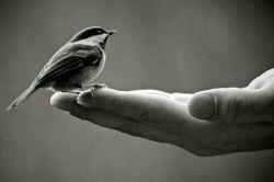 هرگز گنجشکی رو که توی دستت داری، به امید گرفتن کبوتری که تو هواست رها نکن.