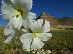 #hamrah1 _ نمای زیبای دیگر از کوه زرین _هرسین 95تابستان