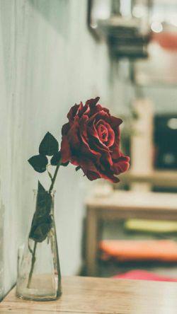 #تو گل سرخ منی...