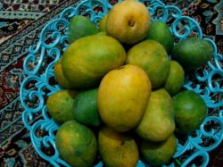 باسلام بفرماییدسلطان میوها  محصول میناب هرمزگان