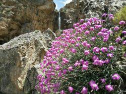 #hamrah1 _ این هم یه عکس دیگه از خودم از آبشار  وزن که تفاوتش نسبت به عکس قبلی فوکوس بر روی آبشار و زمینه پشت گل است . امیدوارم مورد پسندتون قرار بگیره.