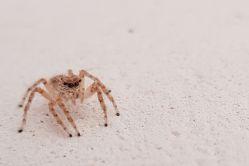 بیکاری دنبال عنکبوت