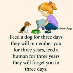 به یک سگ سه رو غذا بدهید او شما را تا سه یاد به یاد خواهد داشت،برای یک انسان سه سال کار کنید او شما را سه روزه فراموش خواهد کرد