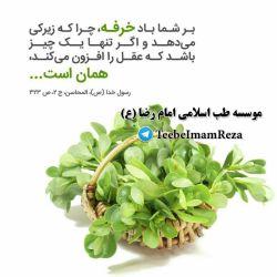 #سبزی_خرفه (پرپین)  امام صادق (ع) نیز در مورد این سبزی فرمودند: بر روی زمین سبزی خوردنی شریفتر از خرفه نیست !