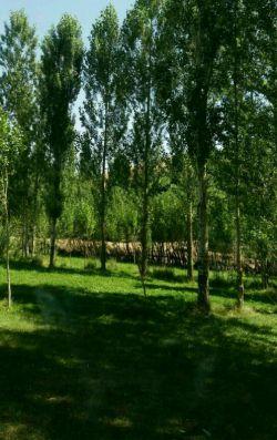 باغ Qareh Segher