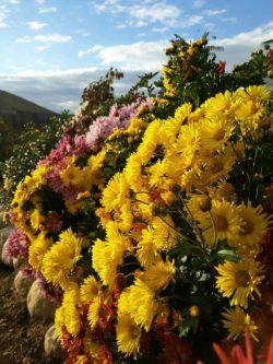 سلام یه کار دیگه از خودم ، این گل های زیبا تقدیم به شما دوستان عزیز روزتون بخیر.
