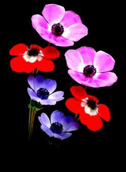 سلام دوستان خوبم این گل زیبا تقدیم به همه تان