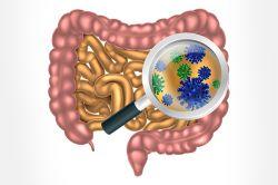 آیا می دانستید 80% از ایمنی بدن ما در روده است! آیا میدانید که نسبت باکتریها به سلولهای در بدن شما ۱۰ به ۱ است؟