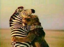 گاهی برای گریه كردن بس كه تنهایی... جایی برایت بهتر از آغوش دشمن نیست...!