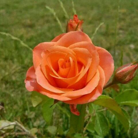   صبح  تابستونی تون به زیبایی این گلها  قلب تون به زلالی این آب  و مهربانی در زندگی تون چون جویبار روان و جاری  یک دنیا خوشبختی برای تک تک شما خوبان آرزومندیم  مثل گل شاداب باشید