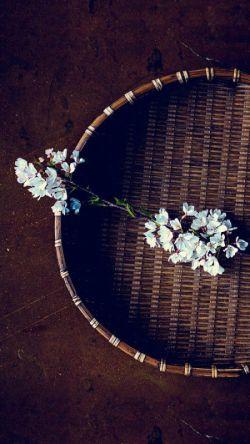عود است زیر دامن یا گل در آستینت❤️  یا مشک در گریبان بنمای تا چه داری❤️  گل نسبتی ندارد با روی دلفریبت❤️  تو در میان گلها چون گل میان خاری...❤️  #حضرت_سعدی_علیه الرحمه