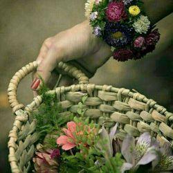 سبدی هست... در اندیشۀ من...  ڪه پُر از گل... بدهم هدیه به تو ...  غافل از آنڪه... تو خود نابتری...  یڪ جهان گل ... بخورد غبطه به تو ...  تقدیم به تک تک شماخوبان