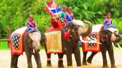 مزرعه فیل ها #پاتایا این مزرعه در گذشته یک روستا بود که در سال ۱۹۷۳ به مزرعه فیل ها و....