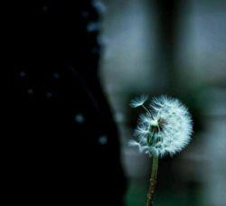 #نکند بوی #تو را باد ب هرجا ببرد//خوش ندارم دل هر رهگذری را ببری... #اعظم_سعادتمند من همانم ک شروعش کردی// #نکند دل بکنی،دل ندهی،بی سروسامان بشوم... همه بر سر زبانند و #تو در میان جانی #سعدی
