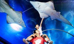 آکواریوم زیر آب پاتایا  این آکواریوم بزرگ در شهر پتاتایا با تونل شیشهای بزرگی که دارد میتواند یک پیادهروی منحصربهفرد را با نمایی از کوسه ها و ماهیها و سفره ماهیهای بزرگ برای شما فراهم کند.