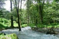 رودخانه و جنگل سوادکوه
